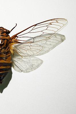 Insekt - p4150598 von Tanja Luther