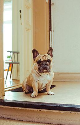 Wachhund - p432m1025988 von mia takahara