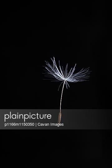 p1166m1150350 von Cavan Images