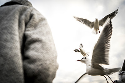 Seagulls in flight - p075m2071217 by Lukasz Chrobok