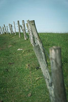 Pasture fence - p1657m2301070 by Kornelia Rumberg