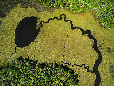 High angle view of algae in swamp at Chassahowitzka Wildlife Refuge - p1166m2025556 by Cavan Images