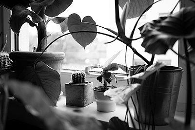 Indoorplants on windowsill - p1600m2237651 by Ole Spata