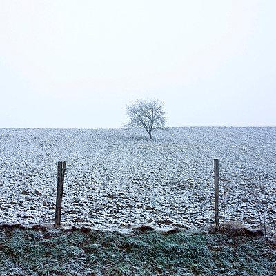 snowy ploughed field - p8130459 by B.Jaubert