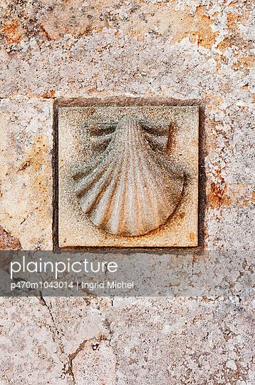 Scallop - p470m1043014 by Ingrid Michel