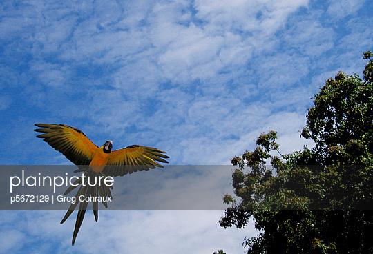 Roter Papagei - p5672129 von Greg Conraux