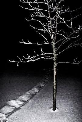 Path to darkness - p971m1109132 by Reilika Landen