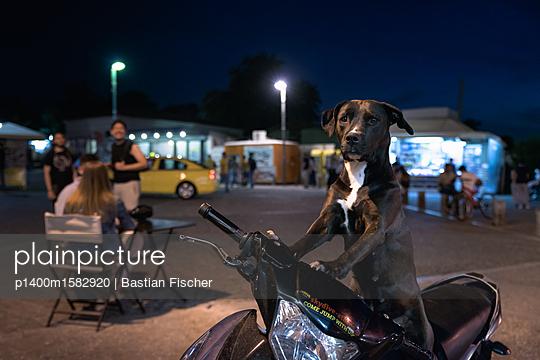 Ein Hund posiert nachts auf einem Motorroller in Fahrerhaltung - p1400m1582920 von Bastian Fischer