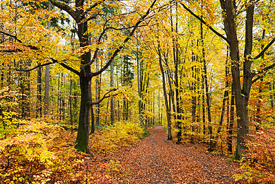 Germany, Rhineland-Palatinate, Palatinate Forest Nature Park in autumn - p300m2042063 by Gaby Wojciech