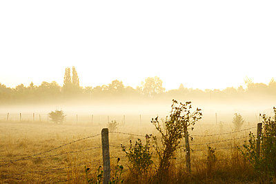 Pasture and fence in the morning fog - p1312m2262366 by Axel Killian