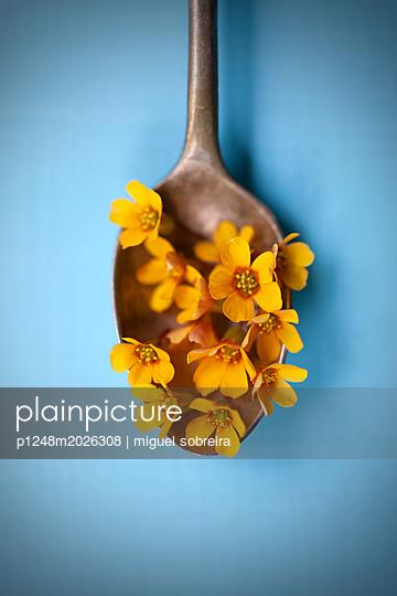Gelbe kleine Blüten - p1248m2026308 von miguel sobreira