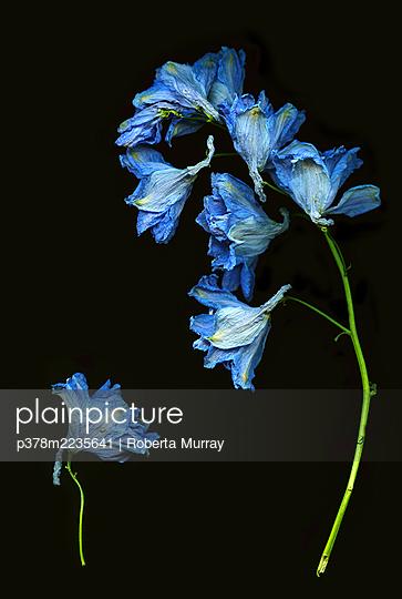 Blue flowers - p378m2235641 by Roberta Murray
