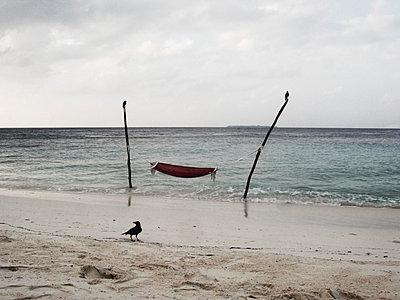Schwarzer Rabe am Strand - p887m778328 von Christian Kuhn