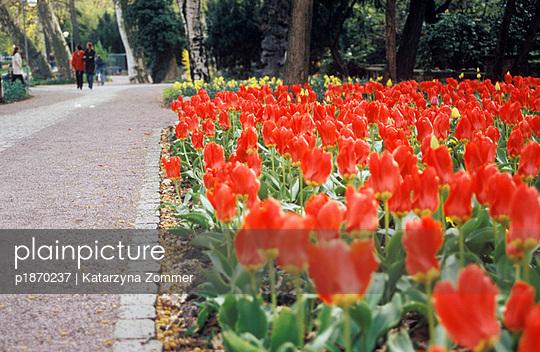 Flowerbed - p1870237 by Katarzyna Zommer
