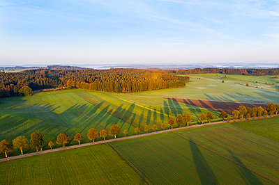 Germany, Bavaria, tree-lined country road near Dietramszell at sunrise, drone view - p300m2081469 by Martin Siepmann