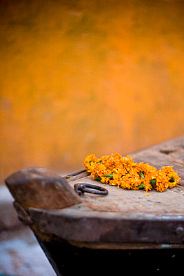 Ganges River, Varanasi, India; Flowers on boat end - p4429130 by David DuChemin