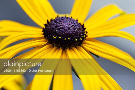 p300m1166363 von Dieter Heinemann