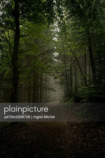 Foggy forest path - p470m2208728 by Ingrid Michel