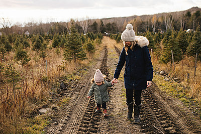Mother and baby girl in Christmas tree farm, Cobourg, Ontario, Canada - p924m1230151 by Jennifer van Son