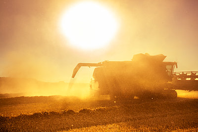 Combine harvester at work - p1057m2008306 by Stephen Shepherd