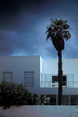 Holiday house and palm tree - p1248m2053879 by miguel sobreira