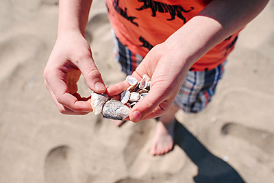 Boy holding shells on beach, close up - p924m2271146 by Viara Mileva