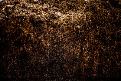 Heap of dung - p248m1051751 by BY