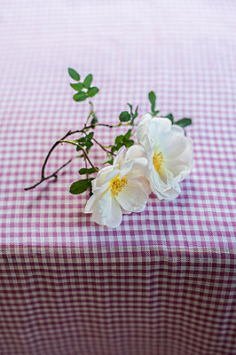 Roses on table - p971m1452474 by Reilika Landen