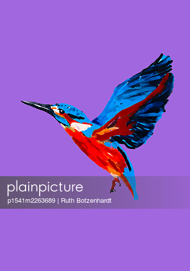 Illustration, Kingfisher in flight - p1541m2263689 by Ruth Botzenhardt