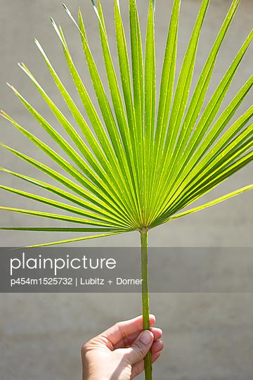Palmzweig - p454m1525732 von Lubitz + Dorner