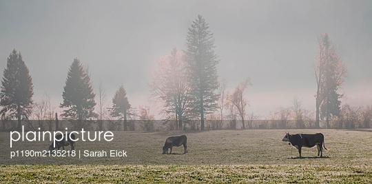 Kühe - p1190m2135218 von Sarah Eick
