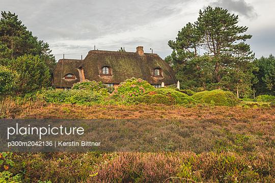 Germany, Schleswig-Holstein, Sylt, thatched-roof house in Braderuper Heide - p300m2042136 von Kerstin Bittner