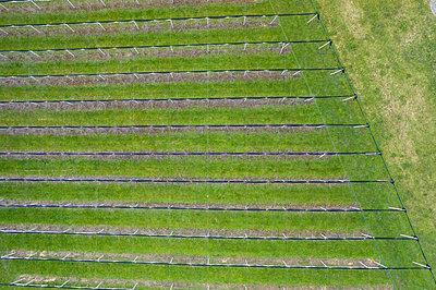 Switzerland, Flawil, St. Gallen, Aerial view of Vineyards - p1332m2204630 by Tamboly