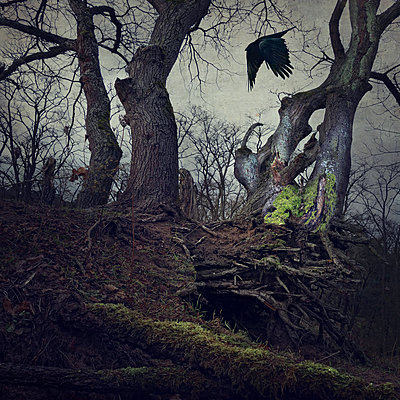 Black Winged Messenger Part IX - p1633m2208882 by Bernd Webler
