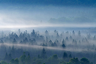 View of misty forest at dawn - p30020949f by Martin Rügner