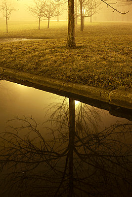 Tree reflecting in water at night - p3721760 by James Godman