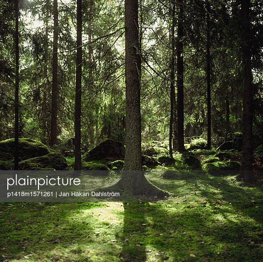Schwedischer Wald - p1418m1571261 von Jan Håkan Dahlström