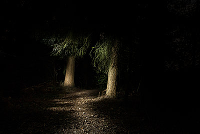 Märchenwald - p403m951535 von Helge Sauber