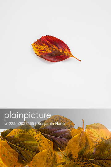 Autumn leaves - p1228m2037265 by Benjamin Harte