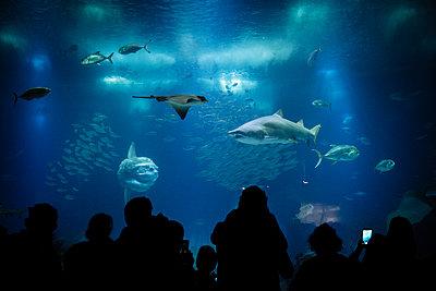 Unterwasserwelt im Ozeanarium I - p1357m2178912 von Amadeus Waldner