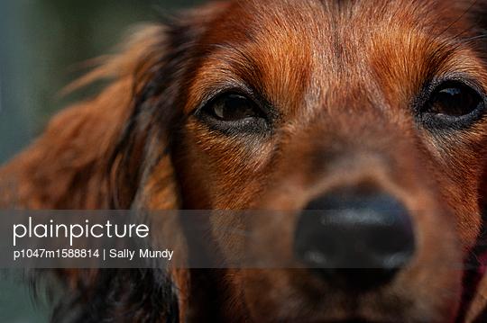 p1047m1588814 von Sally Mundy