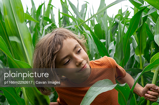 smiling boy curiously looking out green cornplants - p1166m2292617 by Cavan Images