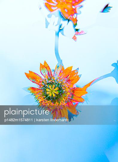 Pflanzen - p1482m1574811 von karsten lindemann