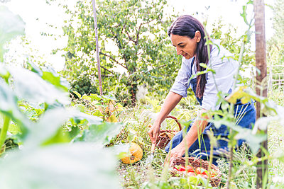 Woman harvesting fresh organically grown vegetables from garden - p300m2221131 by Francesco Morandini