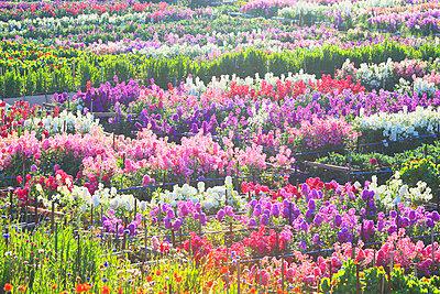 Flower Garden - p307m919968f by Mamoru Muto