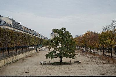 Tuileries garden during lockdown - p1610m2221991 by myriam tirler