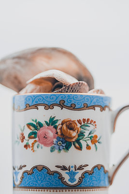 Small vintage cup filled with shells - p1628m2233800 by Lorraine Fitch