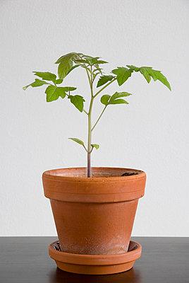 Kürbispflanze - p3050134 von Dirk Morla