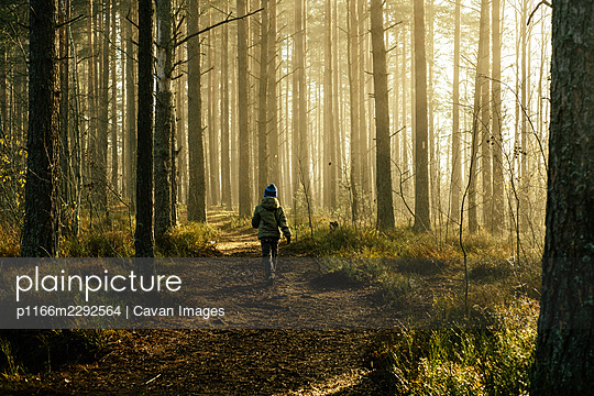 Boy in a jacket walking through the pine forest in the morning. - p1166m2292564 by Cavan Images