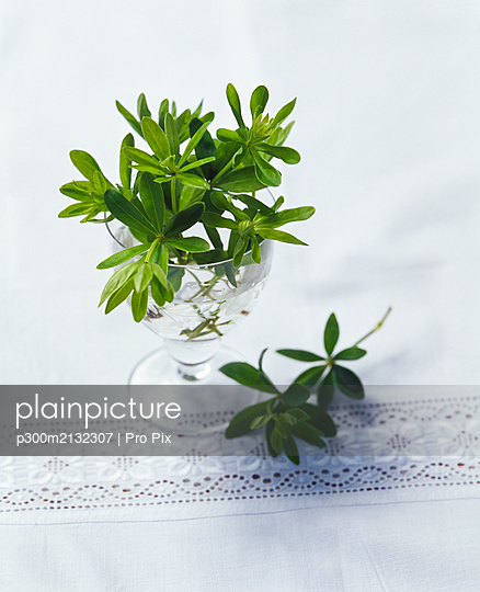 Twigs of sweet-scented bedstraw in glass on table - p300m2132307 by Pro Pix